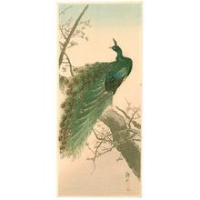 Ito Sozan: Peacock - Artelino