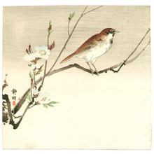 静湖: Bird and Cherry Blossoms - Artelino