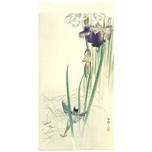 Ohara Koson: Iris and Kingfisher - Artelino