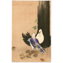 Watanabe Seitei: Two Pigeons - Artelino