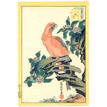 Nakayama Sugakudo: Red Parrot - Artelino
