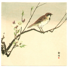 Seiko: Bird and White Blossoms - Artelino