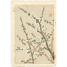 Kawarazaki Shodo: White Plum - Artelino