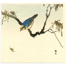 静湖: Blue and Yellow Bird - Artelino