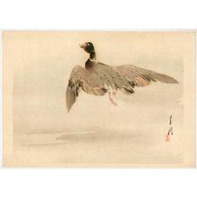Ogata Gekko: Flying Mallard - Artelino