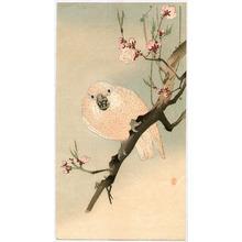 Ohara Koson: Parrot and Plum - Artelino