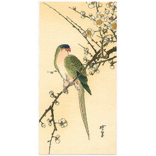 Kawanabe Gyosui: Parakeet on a Plum Branch - Artelino