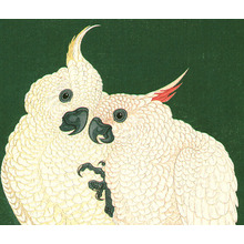 小原古邨: Two White Cockatoos on a Red Bar - Artelino