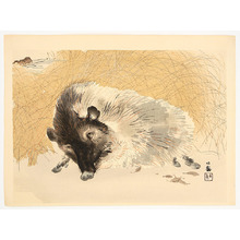 Takeuchi Seiho: Sleepy Boar - Artelino
