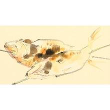 Takeuchi Seiho: Fish - Artelino