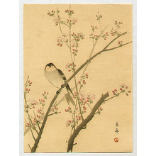 Imao Keinen: Bird on Cherry Tree - Artelino