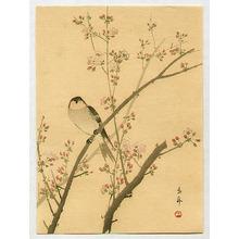 今尾景年: Bird on Cherry Tree - Artelino