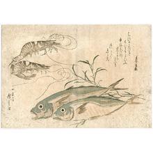 歌川広重: Fish and Prawns - Artelino