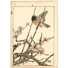 今尾景年: Bird and Cherry Blossoms - Artelino