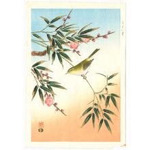 Ashikaga Shizuo: Bush Warbler - Artelino