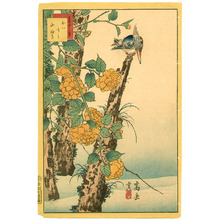 Nakayama Sugakudo: Kingfisher and Globe-flower - Artelino