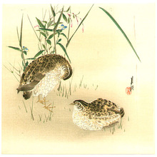尾形月耕: Quails and Autumn Flowers - Artelino