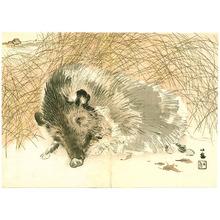 Takeuchi Seiho: Wild Boar - Artelino
