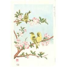 Ashikaga Shizuo: Japanese Quince and Yellow Bunting - Artelino