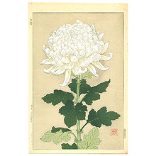 Kawarazaki Shodo: White Chrysanthemum - Artelino