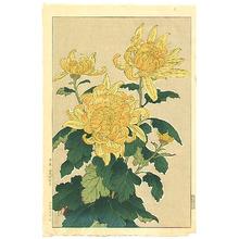 Kawarazaki Shodo: Yellow Chrysanthemum - Artelino