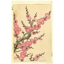Kawarazaki Shodo: Red Plum Blossoms - Artelino