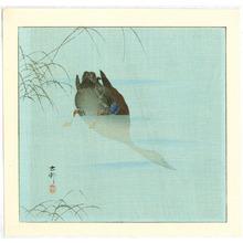 小原古邨: Diving Mallard (blue version) - Artelino