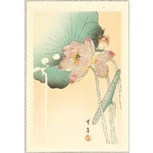 Watanabe Seitei: Songbird and Lotus Flower - Artelino