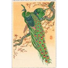小原古邨: Peacock and Peahen on Branch - Artelino