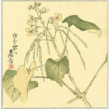 Shibata Zeshin: Summer Flower - Artelino