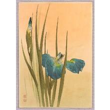 Ito Sozan: Iris - Artelino