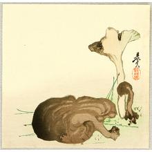 Shibata Zeshin: Wild Mushrooms - Artelino