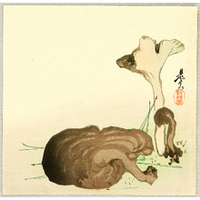 柴田是眞: Wild Mushrooms - Artelino