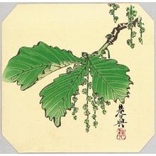 Shibata Zeshin: Oak - Artelino