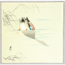 Ohara Koson: Diving Mallard - Artelino