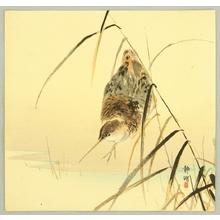 静湖: Snipes - Artelino