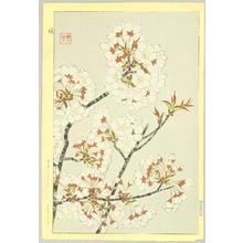 Kawarazaki Shodo: Cherry Blossoms - Artelino