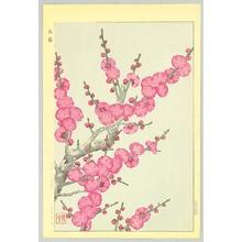 Kawarazaki Shodo: Red Plum - Artelino