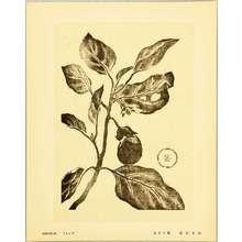 Fukazawa Sakuichi: Eggplant - Hanga Vol.11 - Artelino
