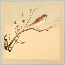 静湖: Bird and White Plum - Artelino