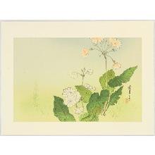Watanabe Seitei: Japanese Primrose - Artelino