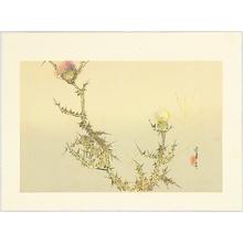 Watanabe Seitei: Thistle - Artelino
