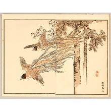 幸野楳嶺: Paradise Bird - Artelino