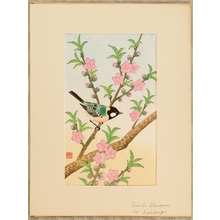 Ashikaga Shizuo: Peach Blossoms and Small Bird - Artelino