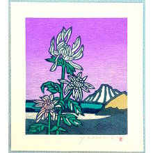 Unknown: Chrysanthemum - Artelino