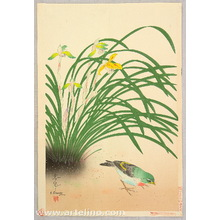 Ono Bakufu: Finch and River Orchids - Artelino