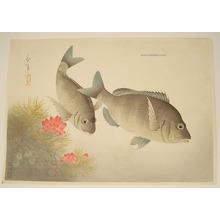 Ono Bakufu: Black Sea Bream - Pictures of Fish in Japan Vol.3 - Artelino