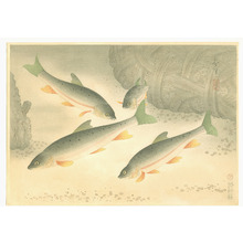 Ono Bakufu: Dace - Pictures of Fish in Japan Vol.3 - Artelino