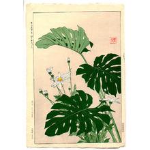 Kawarazaki Shodo: House Plants - Artelino