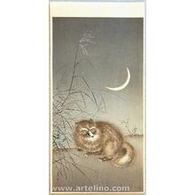 風光礼讃: Racoon Dog and Moon - Artelino